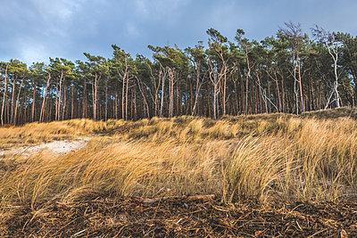 Germany, Mecklenburg-Western Pomerania, Darss, Ahrenshoop, West beach - p300m2080700 by Kerstin Bittner