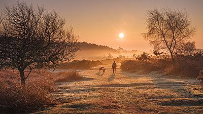 Winter sunrise dog walk in the mist on the heathland of Woodbury Common, near Exmouth, Devon, England, United Kingdom - p871m2113745 by Baxter Bradford