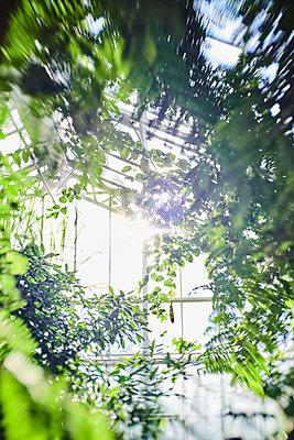 Gewächshaus - p954m2151009 von Heidi Mayer