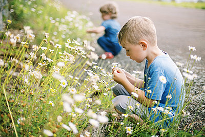 A little boy picking wild daisies on a hot and humid summer day - p1166m2201462 by Cavan Images
