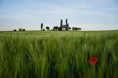 Sweetgrass - p300m906141f by Andreas Pacek