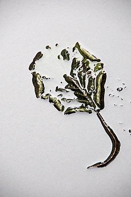 Vegetal - p8130353 by B.Jaubert