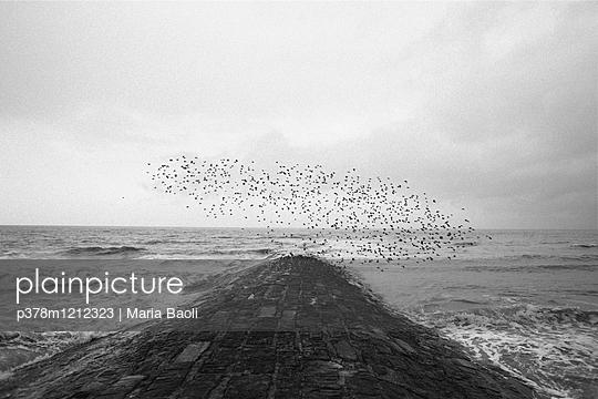 Birds flying - p378m1212323 by Maria Baoli