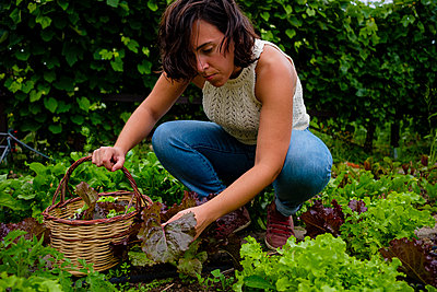 Woman harvesting salad  - p1579m2195689 by Alexander Ziegler