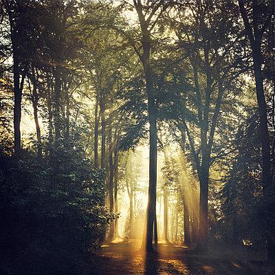 Forest and sun light at forest glade - p300m2160017 von Dirk Wüstenhagen