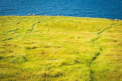 Schafe - p815m1503505 von Erdmenger