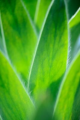 Palm leaves, close-up - p300m1028657f by Guntmar Fritz