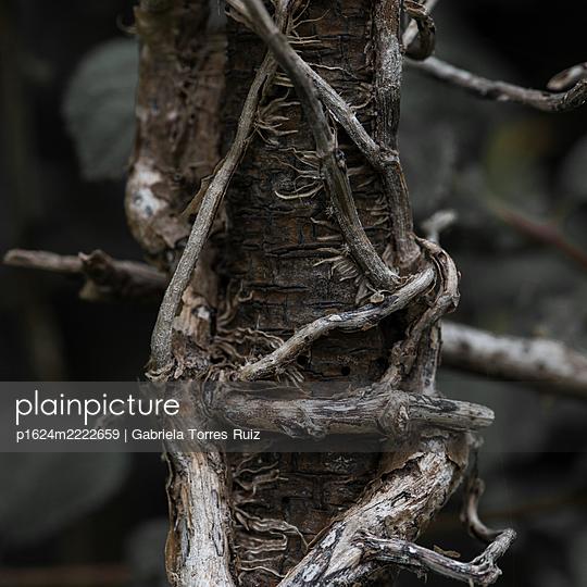Fine roots - p1624m2222659 by Gabriela Torres Ruiz