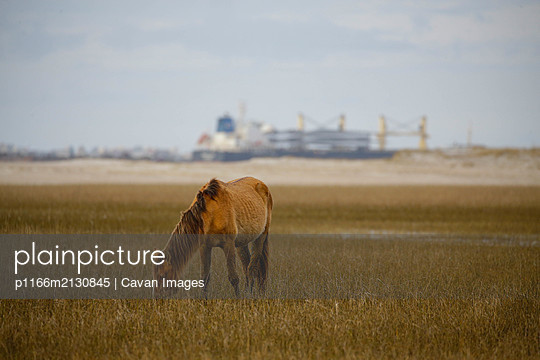 Wild Horses along the Outer Banks of North Carolina. - p1166m2130845 by Cavan Images