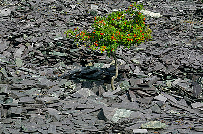 Fruiting Tree on Rocky Plateau - p1072m993530 by chinch gryniewicz
