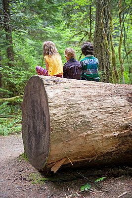 Children sitting together on large tree trunk, rear view - p624m1101484f by Jerome Gorin
