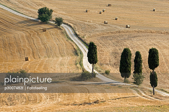 Cypress alley across Corn fields - p3007483f by Fotofeeling