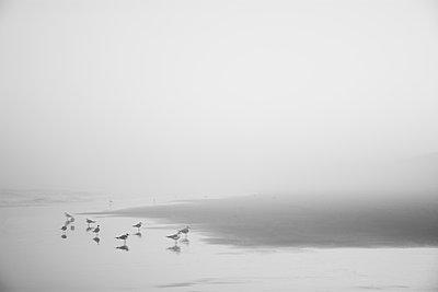 Seagulls on misty Kure Beach in North Carolina, USA - p1427m2077517 by Chris Hackett