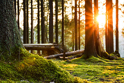 Moss in forest - p312m1493671 by Mikael Svensson