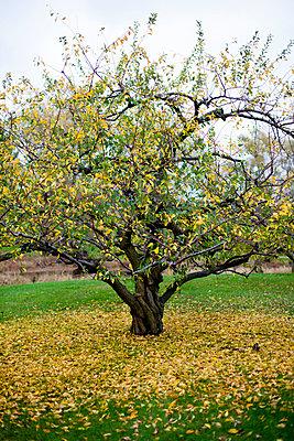 Autumn - p756m753931 by Bénédicte Lassalle