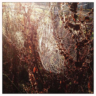 Spinnennetze - p819m883572 von Kniel Mess
