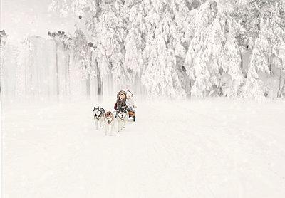 Sled dogs - p1476m2027002 by Yulia Artemyeva