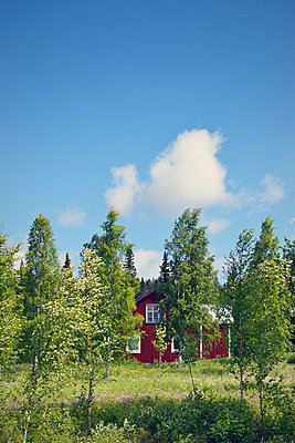 House behind trees - p715m880635 by Marina Biederbick
