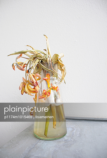 Blumen, angeschimmelt - p1174m1015469 von lisameinen