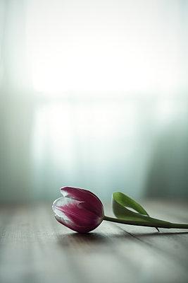 Melancholie - p1432m1492631 von Svetlana Bekyarova