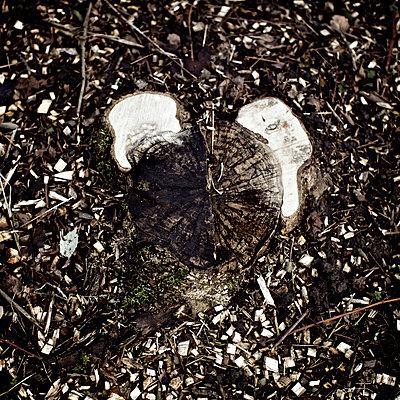 Tree stump - p586m890140 by Kniel Synnatzschke