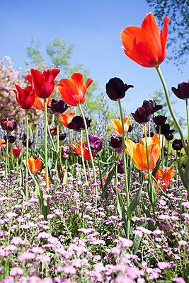 Flowerbed - p045m1154715 by Jasmin Sander