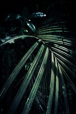 Licht und Schatten auf Palmblättern - p1255m1574983 von Kati Kalkamo