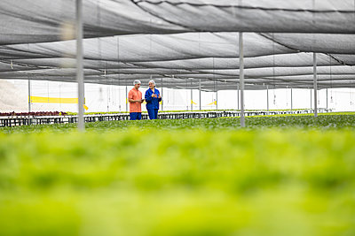 Workers in greenhouse inspecting plants - p300m2084096 by zerocreatives
