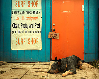 Dog laying near doorway of shop - p555m1231760 by Colin Anderson