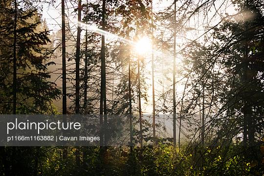 p1166m1163882 von Cavan Images