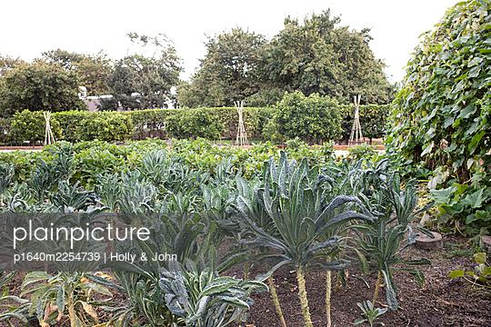 Vegetable garden - p1640m2254739 by Holly & John
