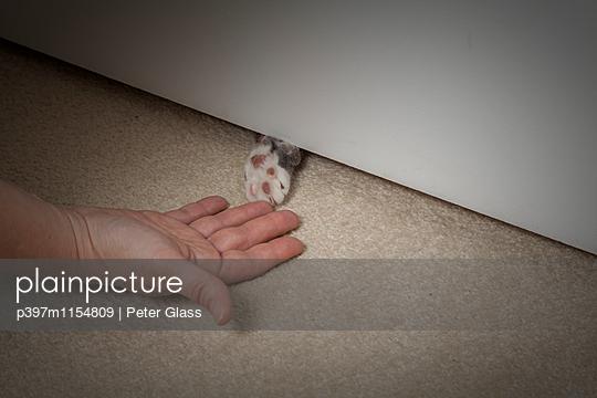 Frauenhand und Katzenpfote unter der Tür - p397m1154809 von Peter Glass
