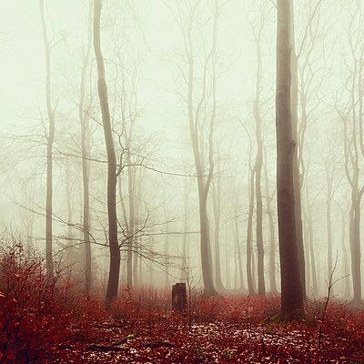 Winter forest and fog - p300m1166016 by Dirk Wüstenhagen