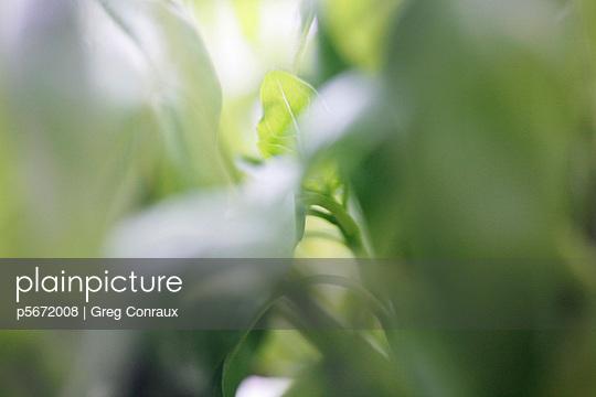 Grüne Blätter - p5672008 von Greg Conraux