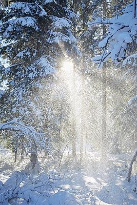 Snow flurry - p464m1109121 by Elektrons 08
