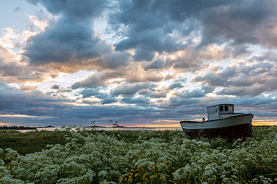 Pink clouds and midnight sun on an old boat in green meadows of blooming flowers, Eggum, Vestvagoy, Lofoten Islands, Norway, Scandinavia, Europe - p871m1225085 by Roberto Moiola