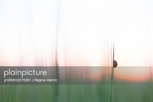 Ladybird in the twilight - p1682m2270261 by Régine Heintz