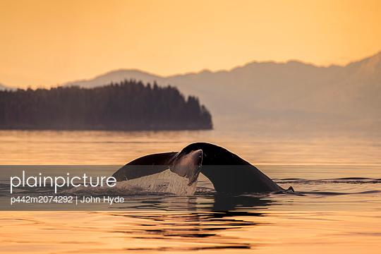 Humpback whale (Megaptera novaeangliae) in Lynn Canal with Coast Range in the background, Southeast Alaska; Alaska, United States of America - p442m2074292 by John Hyde