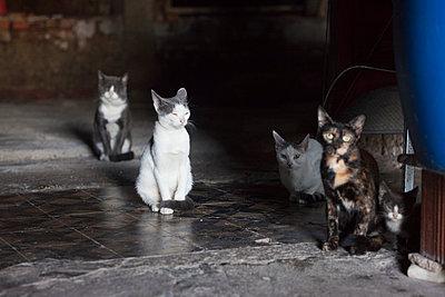 Fünf Katzen in dunkler Lagerhalle - p045m1492319 von Jasmin Sander