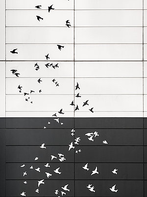 Birds flying Street Art - p1280m1439930 by Dave Wall