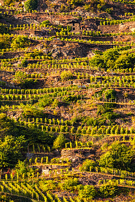 View of vineyards on slope of hill - p429m1417667 by Francesco Meroni