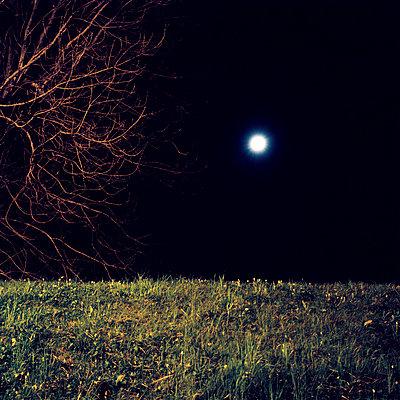 moon tree grass   - p5672677 by Sandrine Agosti-Navarri