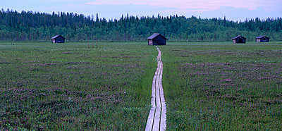 Hay-barns on a mire Norrbotten Sweden. - p5751519f by Sven Halling