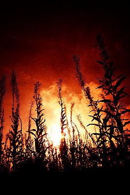 Sonnenuntergang - p597m971224 von Tim Robinson