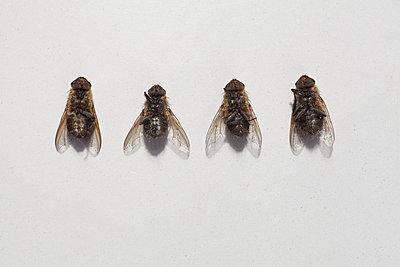 Comparing flies I - p1043m902345 by Ralf Grossek