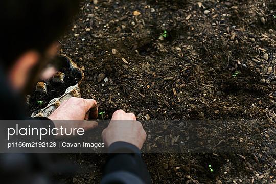 planting seedlings in early spring. - p1166m2192129 by Cavan Images