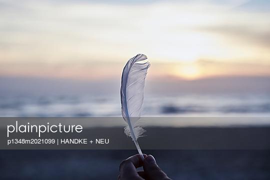 Möwenfeder - p1348m2021099 von HANDKE + NEU