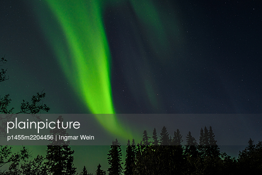 Northern Lights over trees - p1455m2204456 by Ingmar Wein