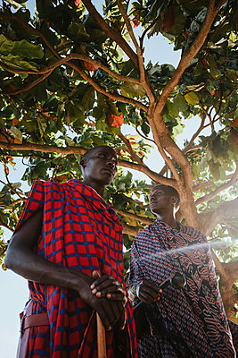 Two masai men in traditional clothes standing under big mkungu tree - p1166m2157024 by Cavan Images