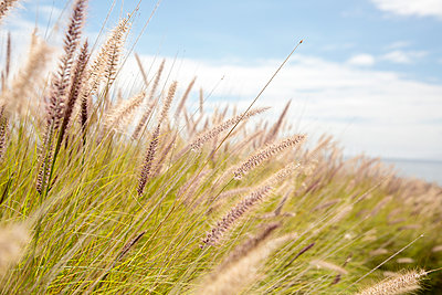 Beach grass - p712m2082623 by Jana Kay